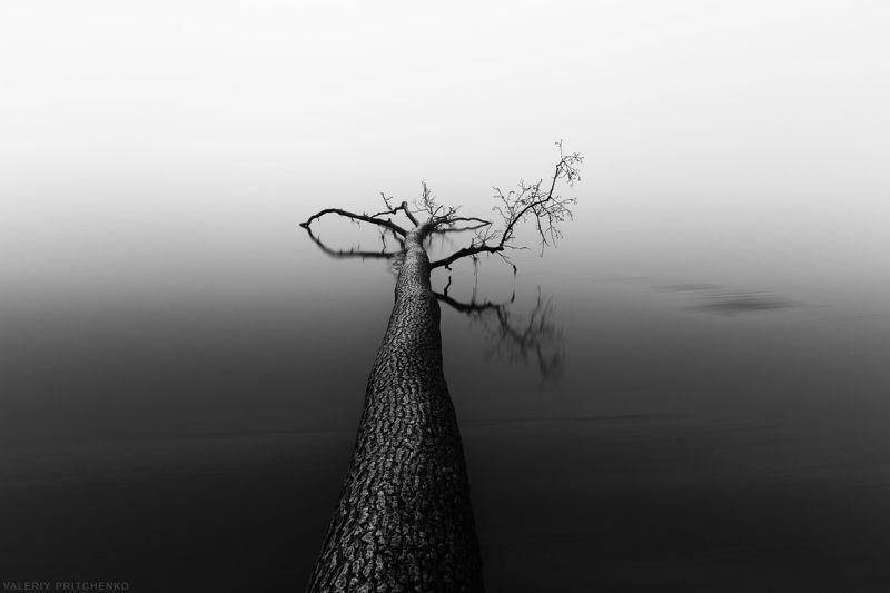 природа, пейзаж, осень, туман, landscape, nature Утро над туманным заливом.photo preview