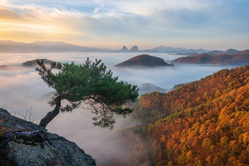 mountains, foliage, bonsai, pine, rock, autumn The Last Pinephoto preview