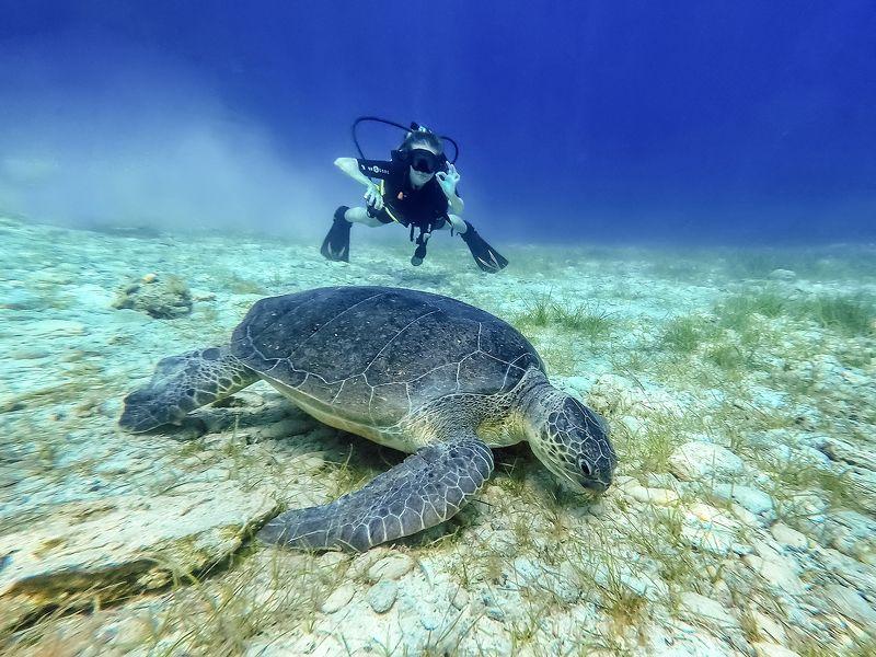 #underwater Underwater Freedomphoto preview