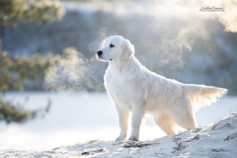 Мороз и солнце; день чудесный...photo preview