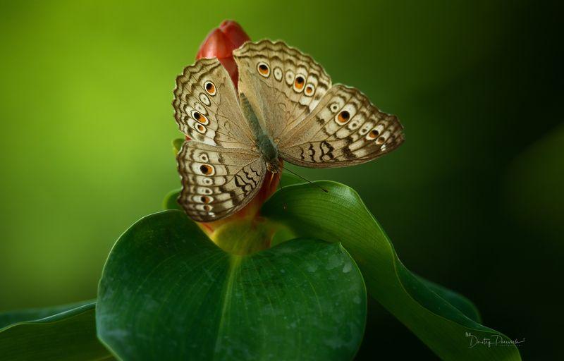 природа, макро, вьетнам, остров фукок В тишинеphoto preview