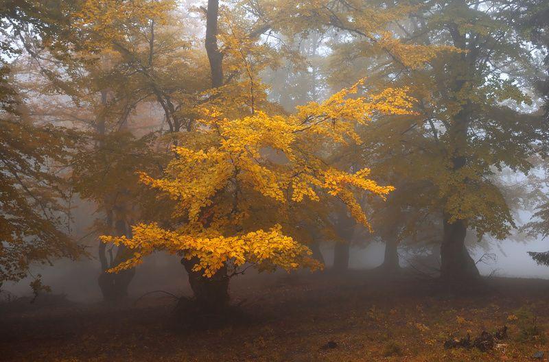 forest, trees, autumn, fog, landscape, travel, nature, mountain ,romania Autumn moodphoto preview