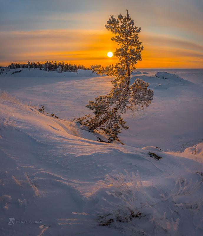 ладожское озеро, карелия, шхеры, природа, скала, остров, зима, рассвет, солнце, снег, сосна, иней Сосна на островеphoto preview