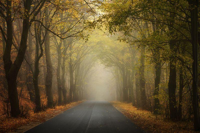 таинственный туннель mysterious tunnel autumn road fall dranikowski mist path trees Таинственный туннельphoto preview
