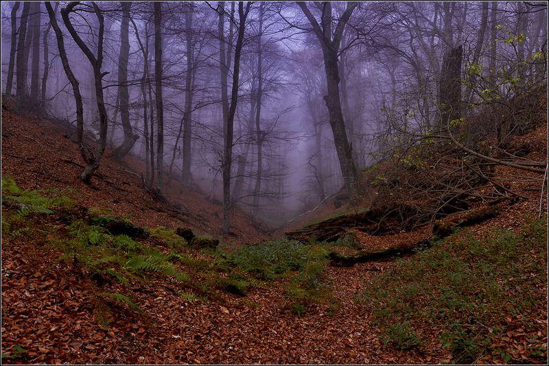 крым, осень, г.демирджи, буковый лес , туман *  *  *photo preview