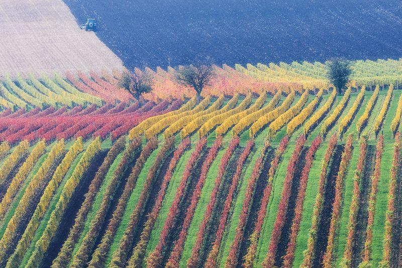 моравия, чехия, виноград, поля, трактор, осень Граффитиphoto preview