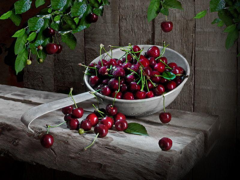 черешня вишня ягоды сад Черешня в закуточке.photo preview