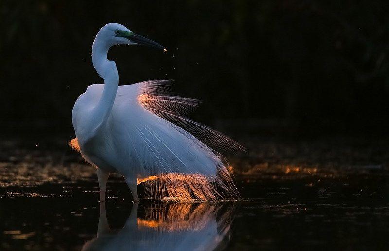 Жар птицаphoto preview