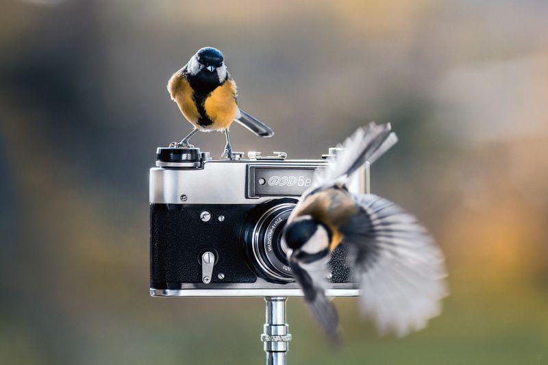Great tit, wildlife, birds Bird photographerphoto preview