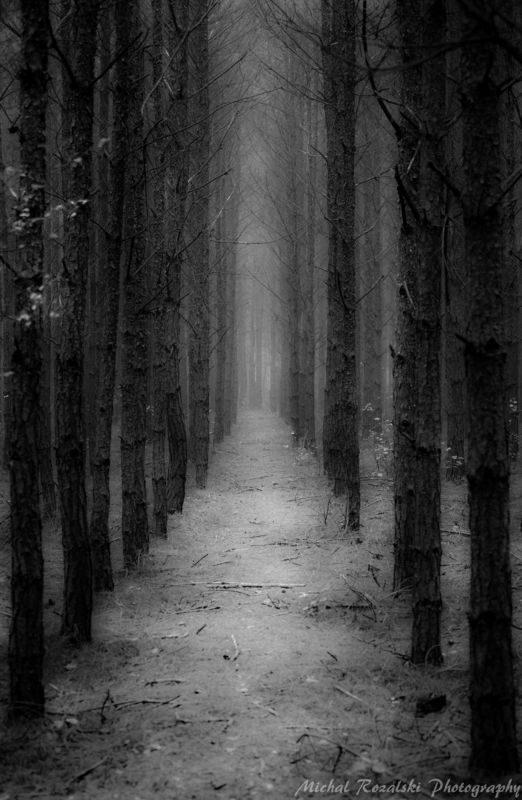 forest Follow my path...photo preview