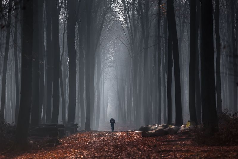 forest, cathedral, sunrise, fog, nature, road, Follow me to the Forest Cathedralphoto preview