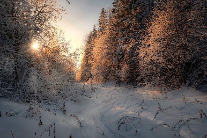 пермь, просека, пейзаж, дорога, урал, зима, лес, мороз, солнце, деревья Дорога в лесуphoto preview