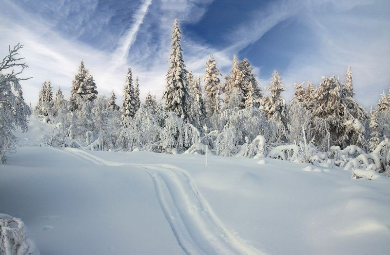 швеция По белому снегуphoto preview
