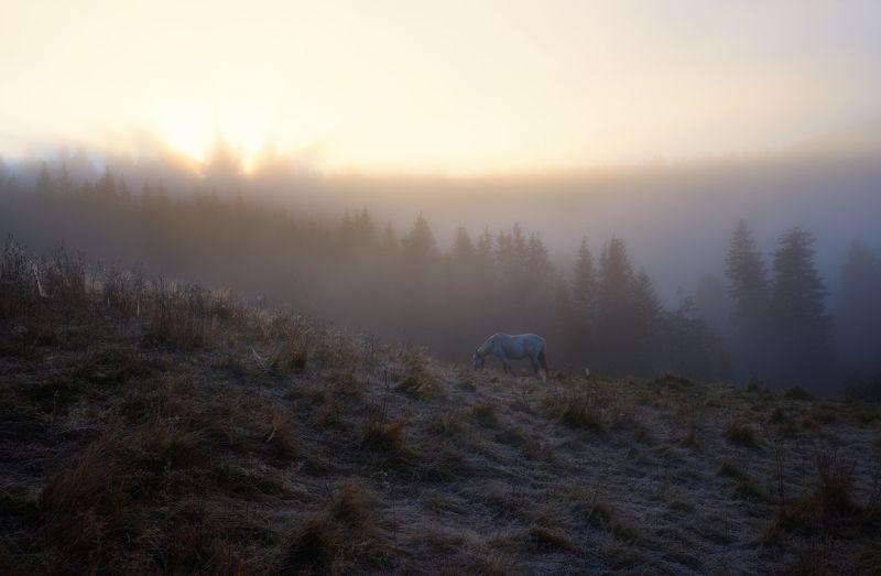 горы, осень, утро, туман, лошадка Утроphoto preview