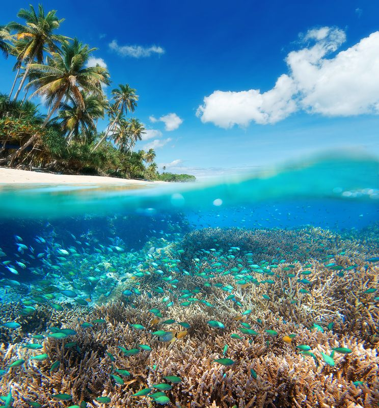 underwater, indonesia, seaworld, fish Пора ехать сноркатьphoto preview