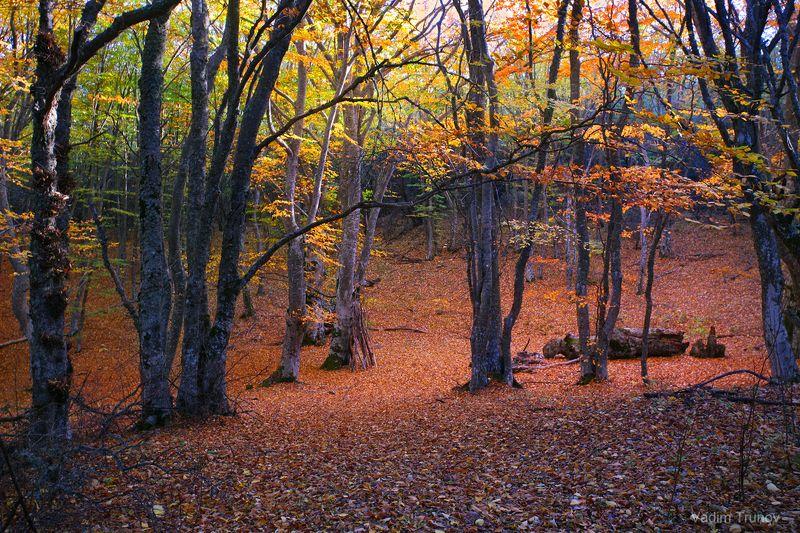 Крымская осеньphoto preview
