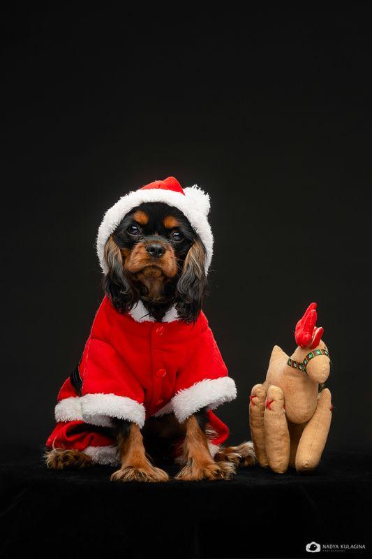 dog К Новому Году готов!photo preview
