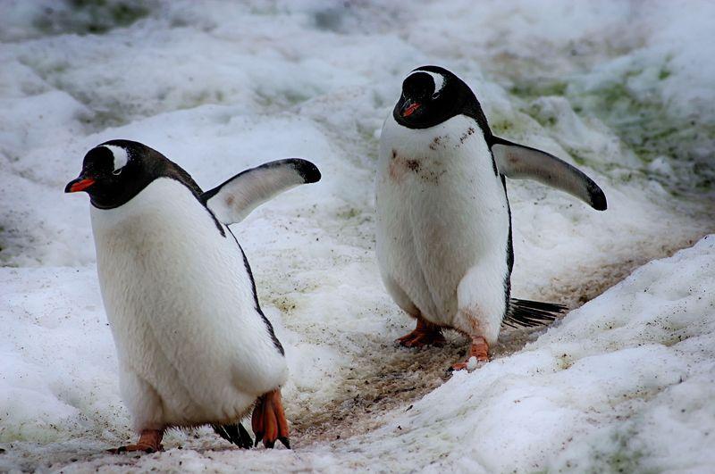 Антарктида 31photo preview