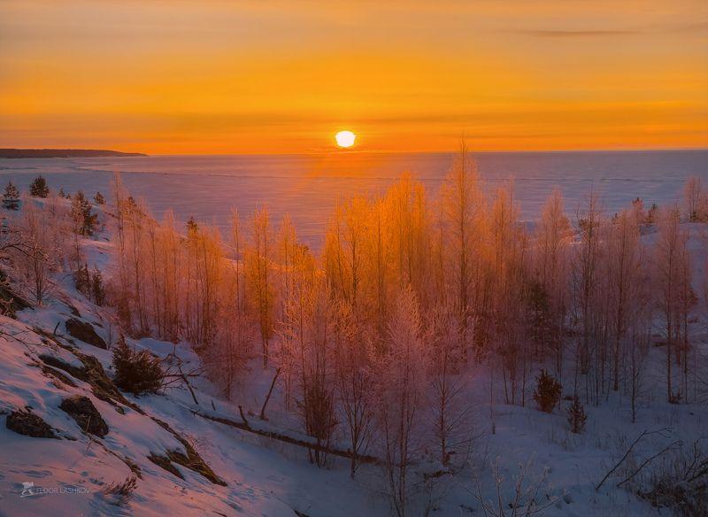 ладожское озеро, карелия, шхеры, природа, скала, остров, зима, рассвет, солнце, снег, сосна, иней, изморозь, Красочная зима на Ладогеphoto preview