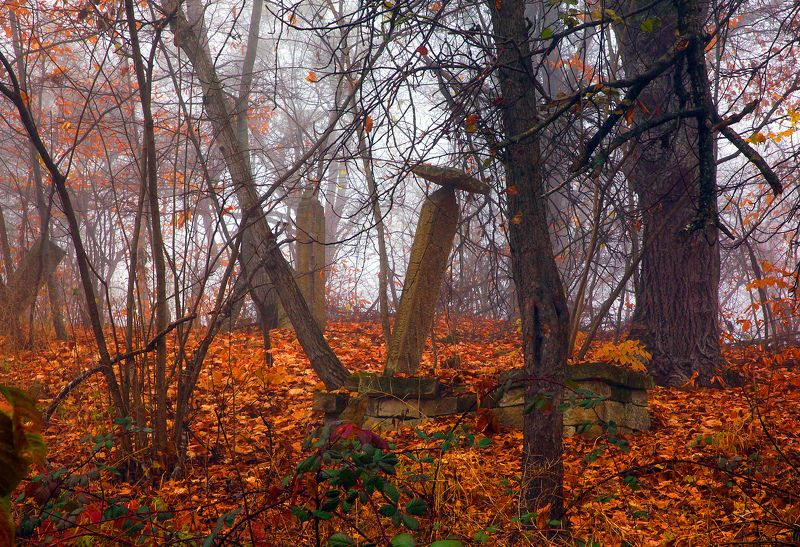 осень,деревья,день,пейзаж,кладбище Старое кладбище..photo preview