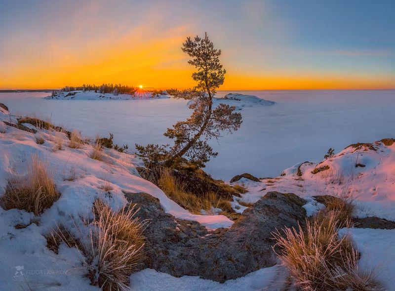 ладожское озеро, карелия, шхеры, природа, скала, остров, зима, рассвет, солнце, снег, сосна, иней, изморозь, Встречая рассвет с соснойphoto preview