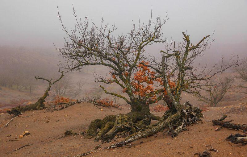 горы,осень,природа,лес,туман Сказочный лес..photo preview