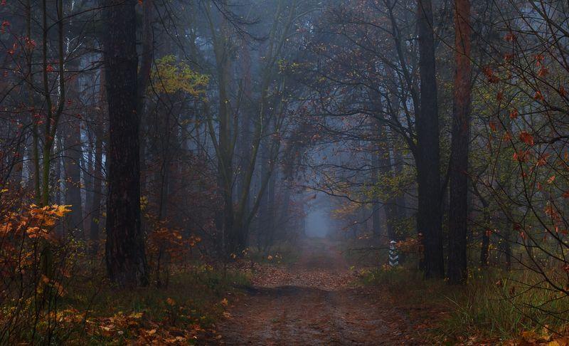 лес, осень, ноябрь, туман Туманные сумеркиphoto preview