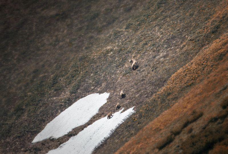 камчатка,медведи,животные,природа,россия,фототур,путешествие Медведи Камчаткиphoto preview