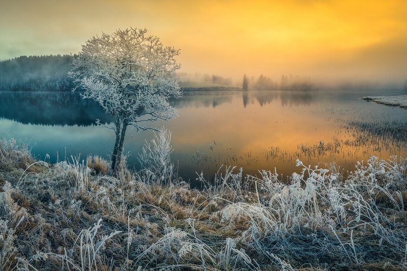 winter,sunrise,fog,frost,frosty,morning,norway,scandinavia,lake,tree,landscape,wintertime,scenery,light Frosty sunrisephoto preview