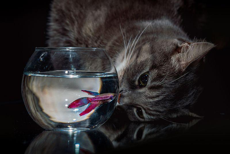 Про кошку и рыбкуphoto preview
