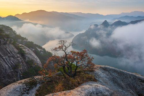 The Last Autumn Of The Tree