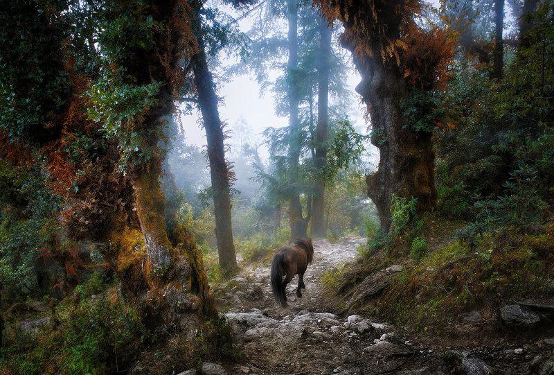 nepal, mountains, forest, В одиночестве.photo preview