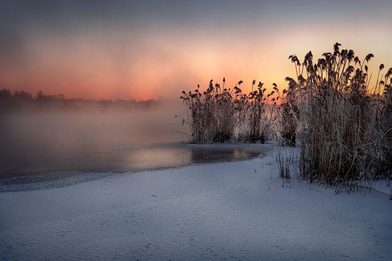 шатура, озеро, белое, пейзаж, лед, туман, зима, трава, рассвет, зарево Лед и туманphoto preview
