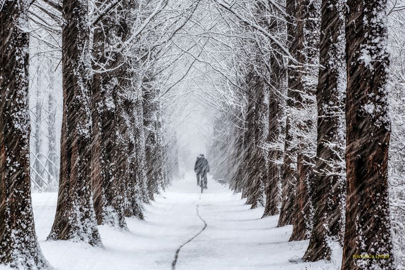 snow snowy trace trees cycle winter Korea landscape travel следphoto preview