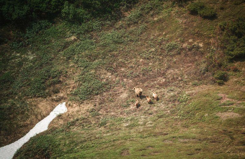 камчатка,медведи,животные,природа,россия,фототур,путешествие Медвежья семьяphoto preview