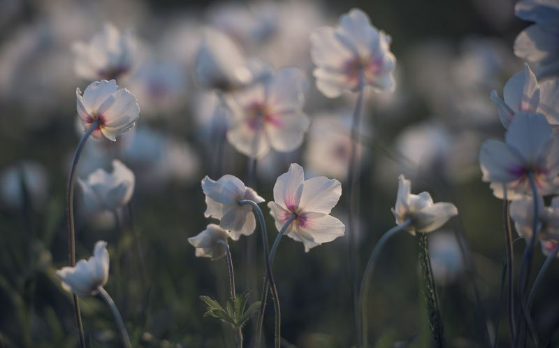 the morning of my favorite flowersphoto preview