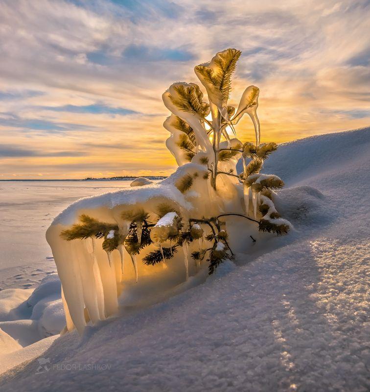 ладожское озеро, карелия, зима, снег, солнце, фототур, лёд, закат, сосна, дерево, наледь, сосульки, небо К Новому году готова!photo preview