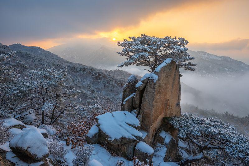 mountain range, mountain peak, bonsai, pine, snow, frozen Tree on a rockphoto preview