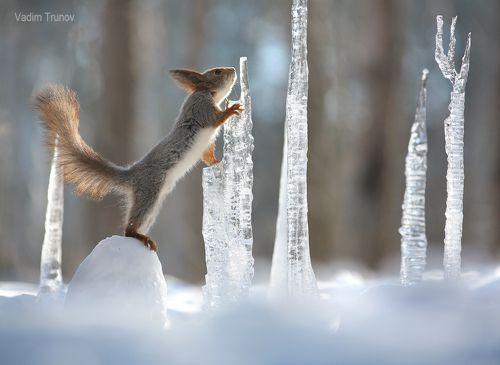 Зимний хрусталь