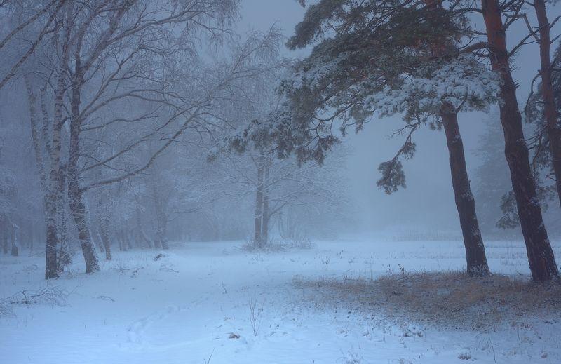 зима лес снег утро туман Светаетphoto preview