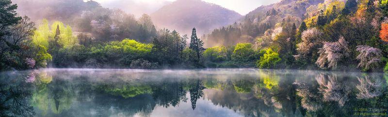 reflection flower water spring trees mountain landscape fog sunrise morning Korea sound of seasonphoto preview