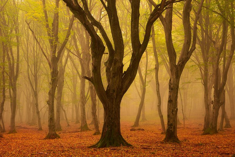 forest, trees, autumn, fog, landscape, travel, nature, mountain, romania The Kingphoto preview