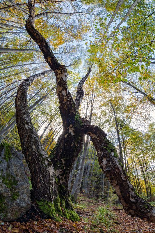 fisheye, tree, forest, mountain, landscape, sky, moss, view, nikon Fisheye viewphoto preview