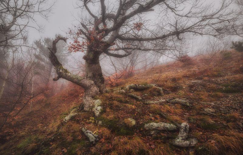 крым,лес,туман,демерджи,гора,природа,пейзаж,осень,фототур,деревья,россия Страж букового лесаphoto preview