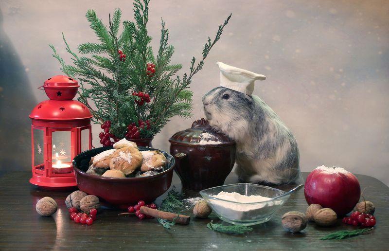 композиция, животные, морские свинки, зима, новый год, печенье Пекарь печеньяphoto preview