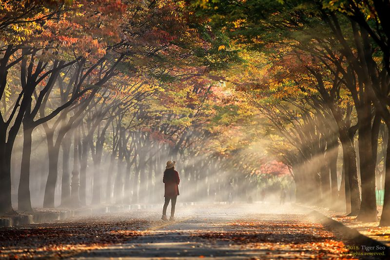 rays woman sunrise morning trees autumn color light landscape woman in raysphoto preview