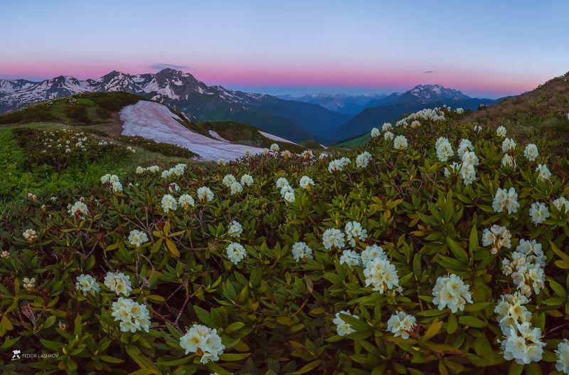 абхазия, фототур, путешествие, туризм, горы, хребет, лето, кавказский хребет, ледник, рододендрон, цветы, флора, рассвет, заря, закат, облака, Цветущие альпийские луга Абхазииphoto preview
