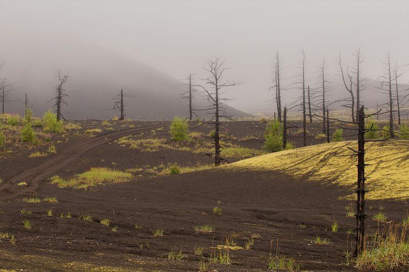 камчатка, лес, мертвый лес, вулкан, природа, пейзаж, россия, туман,фототур,сопка Туманная Камчаткаphoto preview