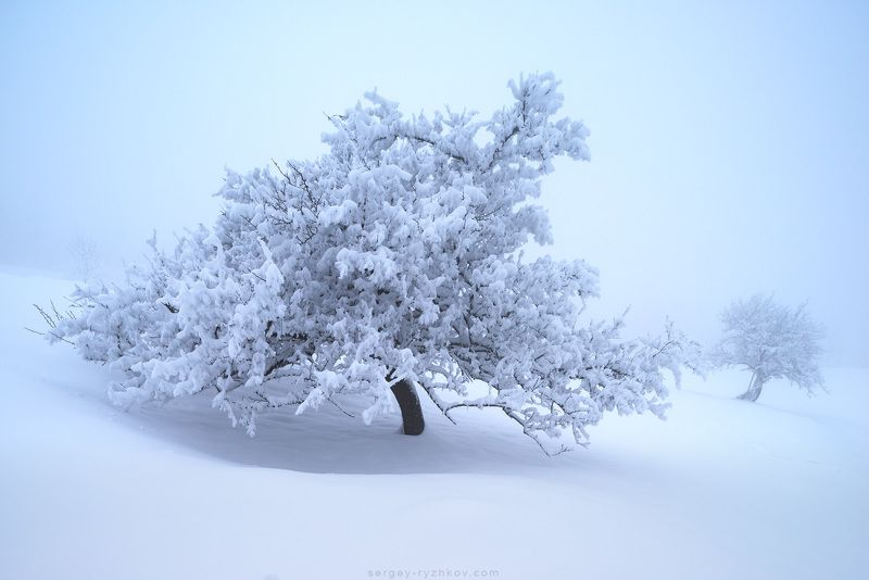 карпаты, украина, природа, зима, дерево, пейзаж, туман, fog, carpathians, ukraine, nature, landscape, winter, ***photo preview
