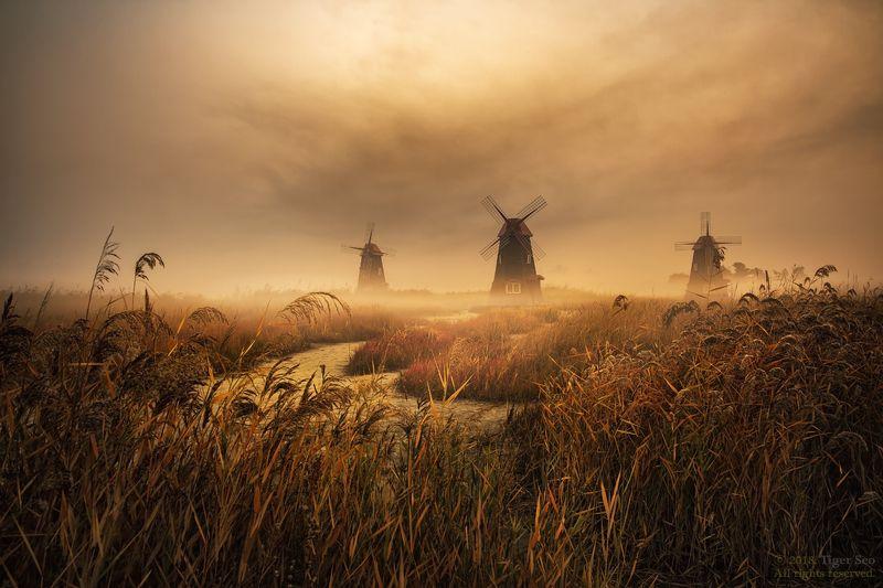 windmill forest sunrise fog foggy cloud light Kroea landscape foggy morningphoto preview